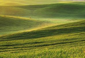 grönt fält