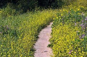blomma väg foto