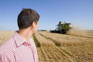 bonde som tittar på kornfält foto