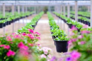 hängande blomkrukor foto