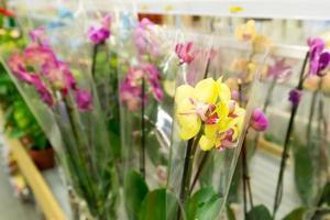 vackra färgglada blommor i butik foto