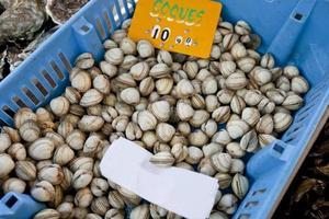 närbild av skaldjur i behållare i butiken foto