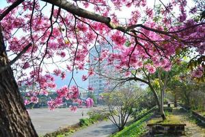 rosa blommor foto