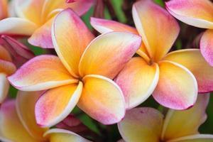 thailändska blommor