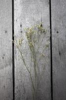 torkad blomma foto