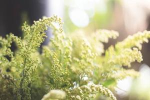 gräs blomma foto