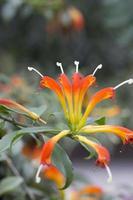 växt - korg växt foto