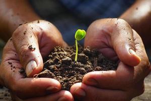 plantering, sängkläder växt foto