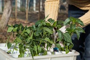 trädgårdsskötsel, plantering koncept