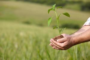 manhänder som håller en växt. ekologikoncept foto