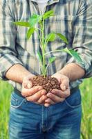händer som håller en växt som växer foto
