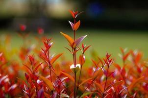 växt foto