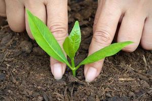 kvinnor att plantera träd. närbild. foto