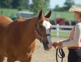 cowgirl på en hästshow foto