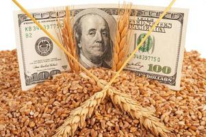 jordbruksinkomstkoncept foto