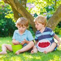 två små syskonbarn som äter hallon i hemmas trädgård. foto