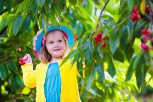 vacker liten flicka som plockar färskt körsbär på en gård