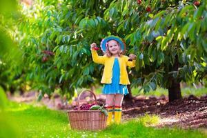 liten flicka som plockar färskt körsbär på en gård