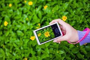 vackra gula blommor foto