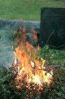 eldflammar brinnande buske foto