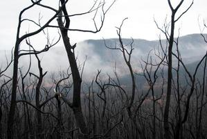 melbourne bushfires australia 2009 svart lördag foto