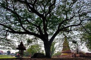 stort träd i buddhistiska forntida tempel foto