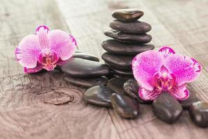 fuchsia malorkidéer och svarta stenar på väderbitna däck foto