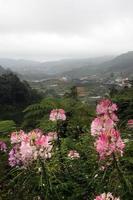 cameron highland, malaysia foto