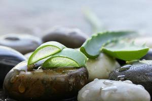 färska gröna blad av aloe vera-växten foto