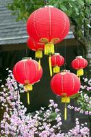 kinesisk röd latern foto