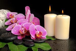 spa-inställning av blommande kvist violetta orkidé (phalaenopsis) foto
