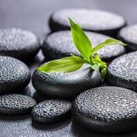 vackert spa-koncept av grön grenbambu foto