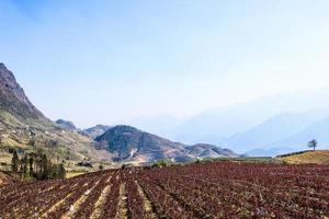 blommafält, terrasserad kultur, sapa, Vietnam foto