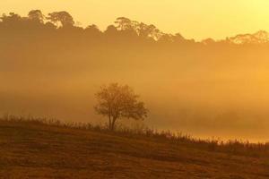 träd med dimma foto