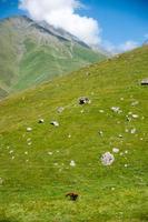 vandring i berg i Georgien