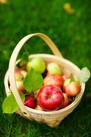 organiska äpplen i en korg foto