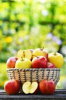 organiska äpplen i trädgården. balanserad diet foto
