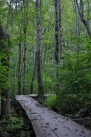 trä gångbro genom skogen foto