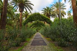 santa cruz trädgård