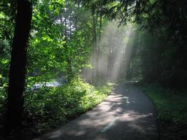 solljus genom skogen