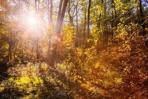 solig dag i soliga skogsträd. naturskog, solljus