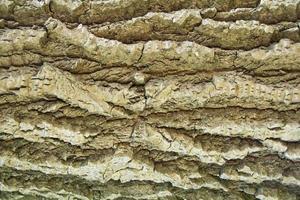 brun textur stamträd foto