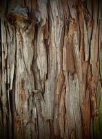 naturlig textur trädbark foto