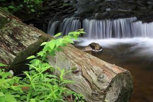 logga och vattenfall foto