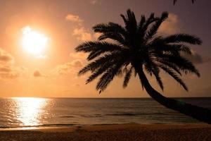 solnedgångstrand, o'ahu, hawaii foto