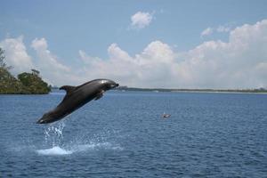 hoppande delfin foto