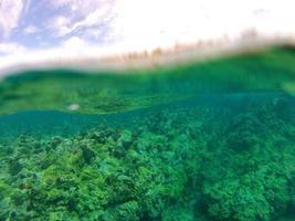 korall foto