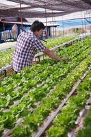 asiatisk jordbrukare som arbetar