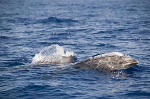 delfiner med nappade flaskor foto