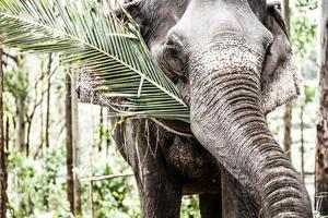 asiatisk elefant i Indien. foto